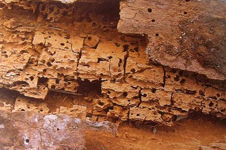 Traitement de la mérule à Mont-de-Marsan, Saintes, Royan et Bordeaux