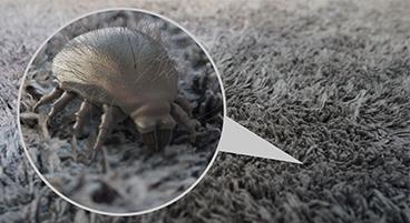 Les acariens, une conséquence de l'humidité