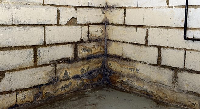Mur dans une cave humide
