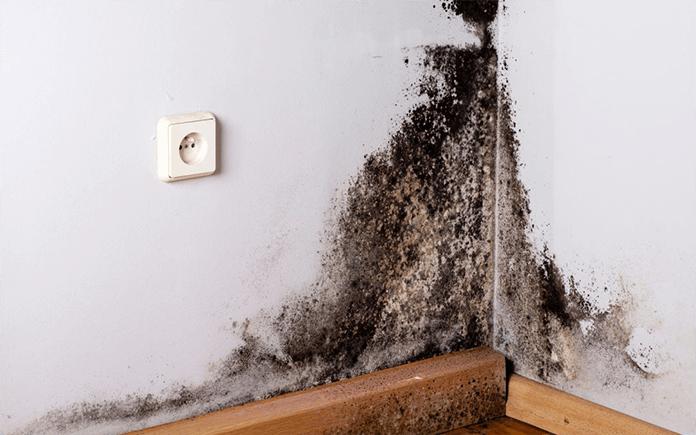Dégradations d'un mur dues à l'humidité - Image mobile