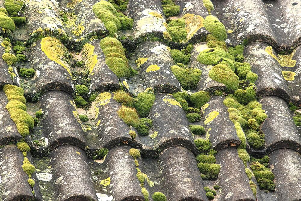 Mousses sur la toiture - Image mobile